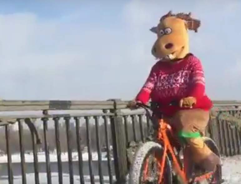 Городской олень покорил Киев передвигаясь на велосипеде (Видео)