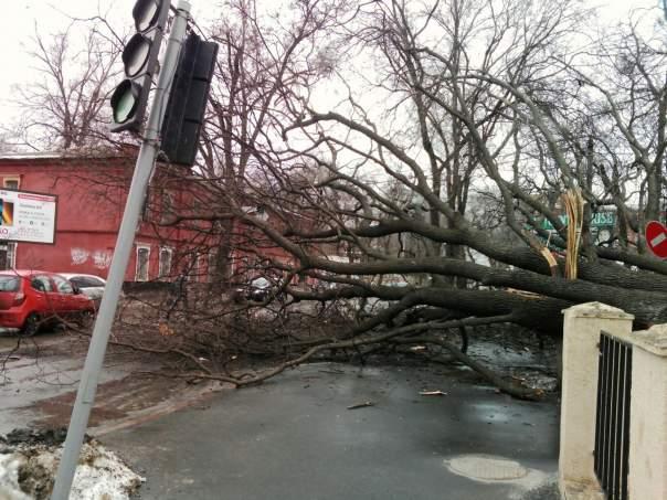 В Харькове дерево перекрыло движение трамваев (Фото)