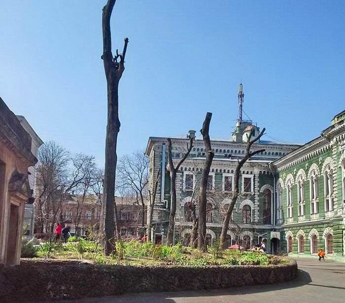 В Одессе изуродовали роскошные деревья (Фото)