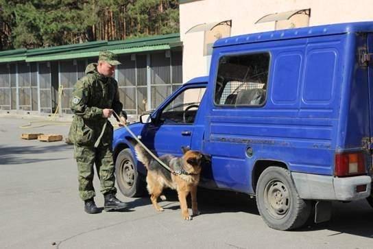 Вместе с полицейским Евровидение -2017 будут охранять огромное количество собак