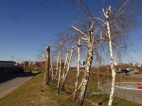 Реклама превыше всего: в Киеве ради билбордов вырубили деревья (фото)