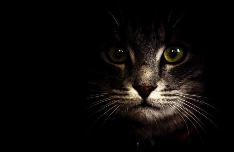 """На Житомирщине кот """"оповестил"""" жильцов дома о пожаре"""