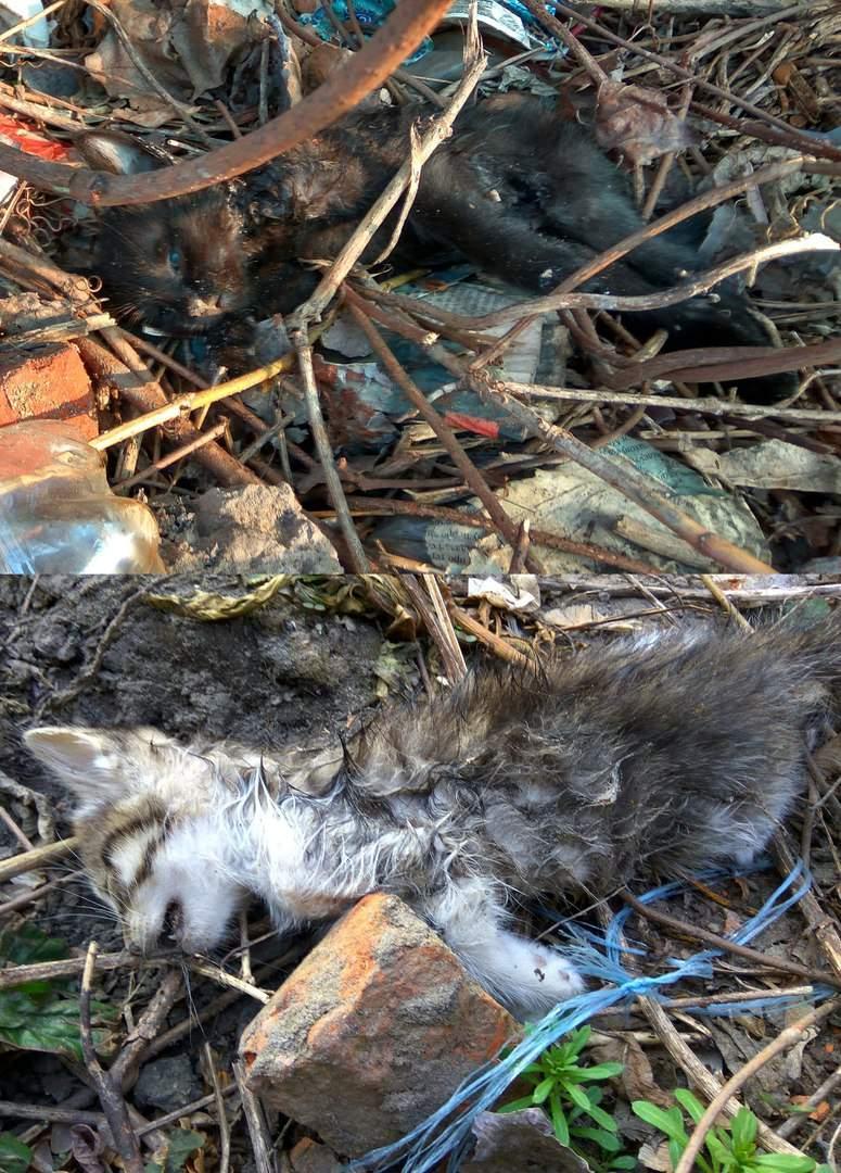 В Харькове жестоко расправились с маленькими котятами (Фото)