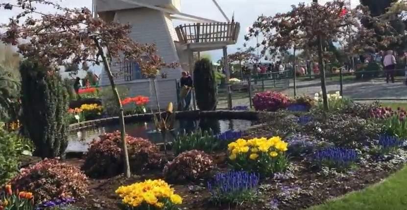 В США стартовал красочный фестиваль тюльпанов (видео)
