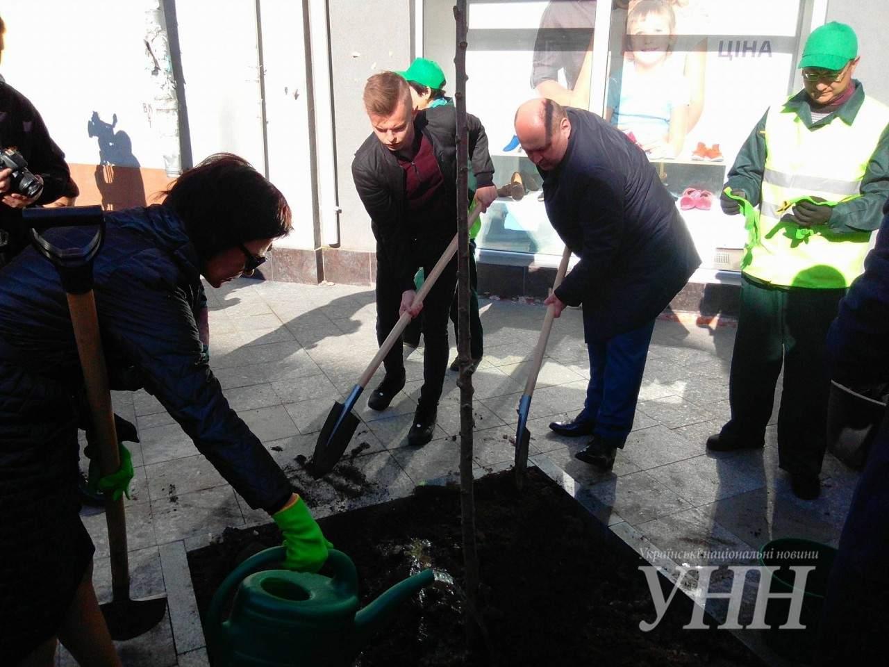 Из Японии с любовью: в Житомире высадили аллею сакур (фото)