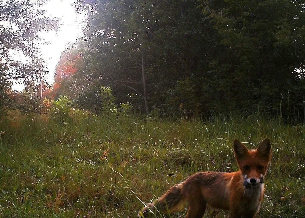 Зона отчуждения в Чернобыле превратилась в настоящий природный заповедник (Фото)