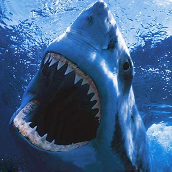 В США на женщину напала акула