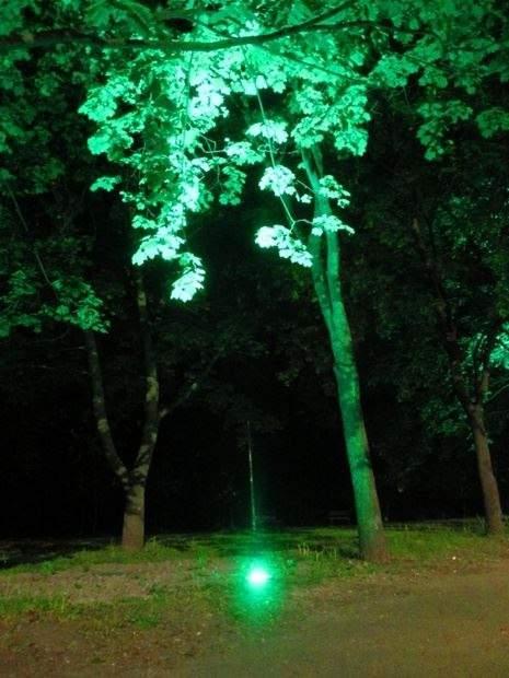 Столичная роскошь: в исторической местности Киева заработала подсветка деревьев (фото)