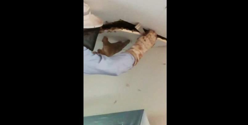 В США в доме у жительницы Джорджии обнаружили гигантский пчелиный улей (видео)