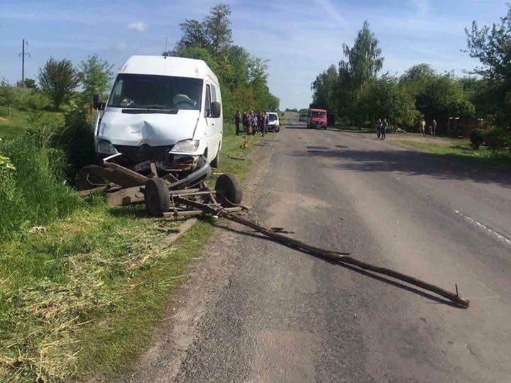 Во Львовской области лошадь стала жертвой ДТП (Фото)