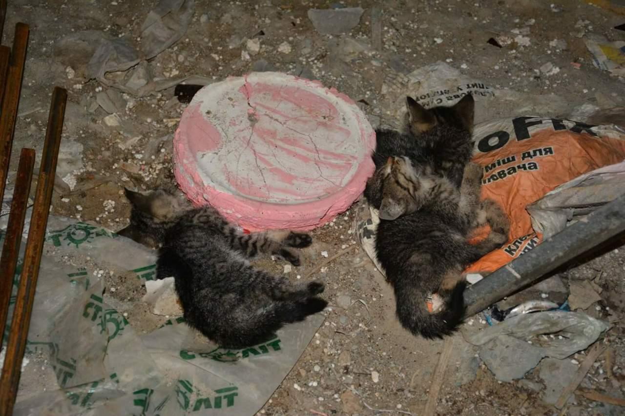 В Киеве неизвестные живодёры отравили котят-любимцев детей (фото)