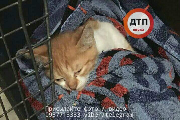 Под Киевом неизвестные покалечили котенка (Фото)