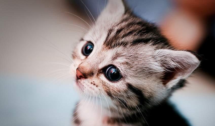 В Луцке живодера, который зверски издевался над котенком, посадят на 5 лет