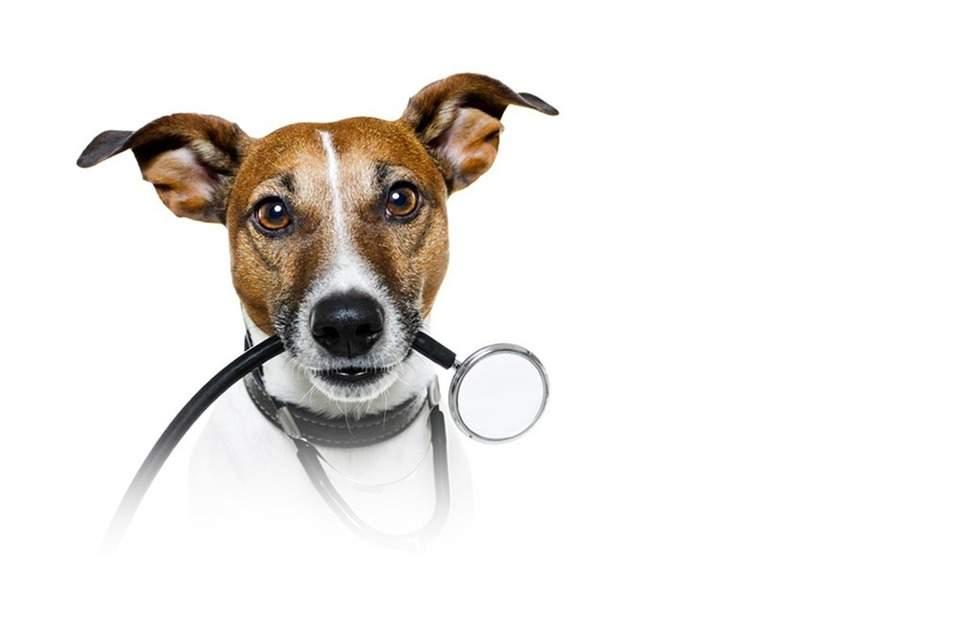Во время операции в ветеринарной клинике Одессы убили собаку