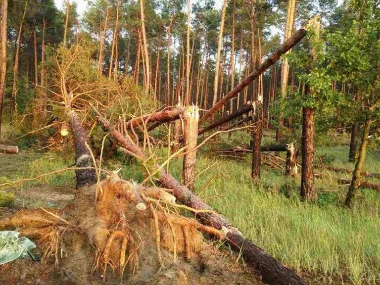 На Черкасчине туристка погибла из-за обрушения дерева на палатку