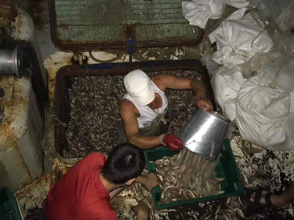 На Херсонщине СБУ арестовала браконьеров с большим уловом (фото)