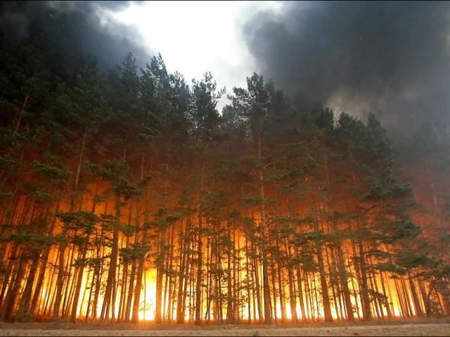 На Херсонщине горят лесные массивы
