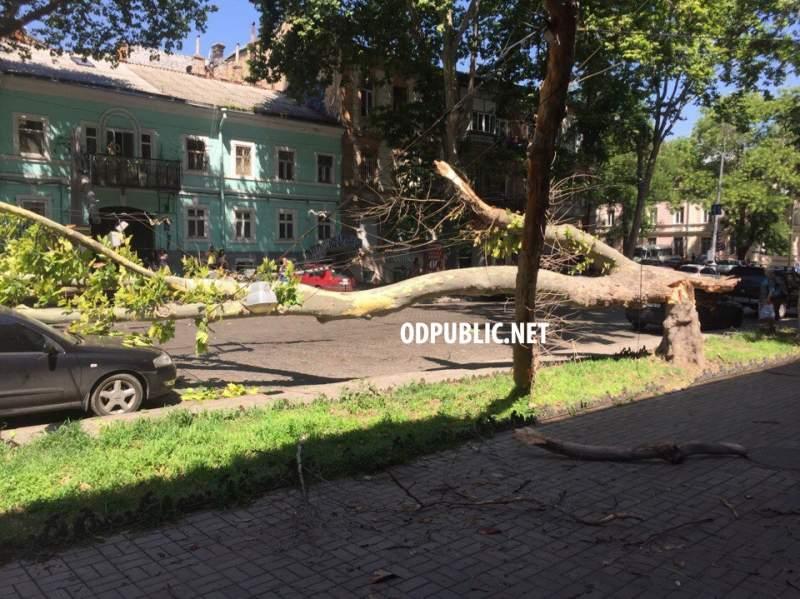 В Одессе многолетний платан обрушился на припаркованные автомобили (фото)