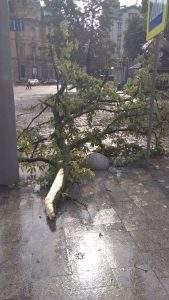 Во Львове после сильнейшего ливня начался деревопад (фото)