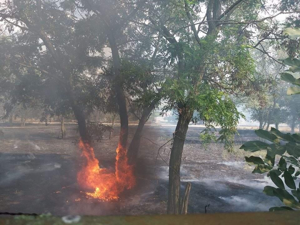 В херсонском парке второй сильный пожар за две недели (фото)