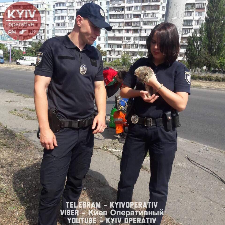 Столичные патрульные помогли спасти котенка