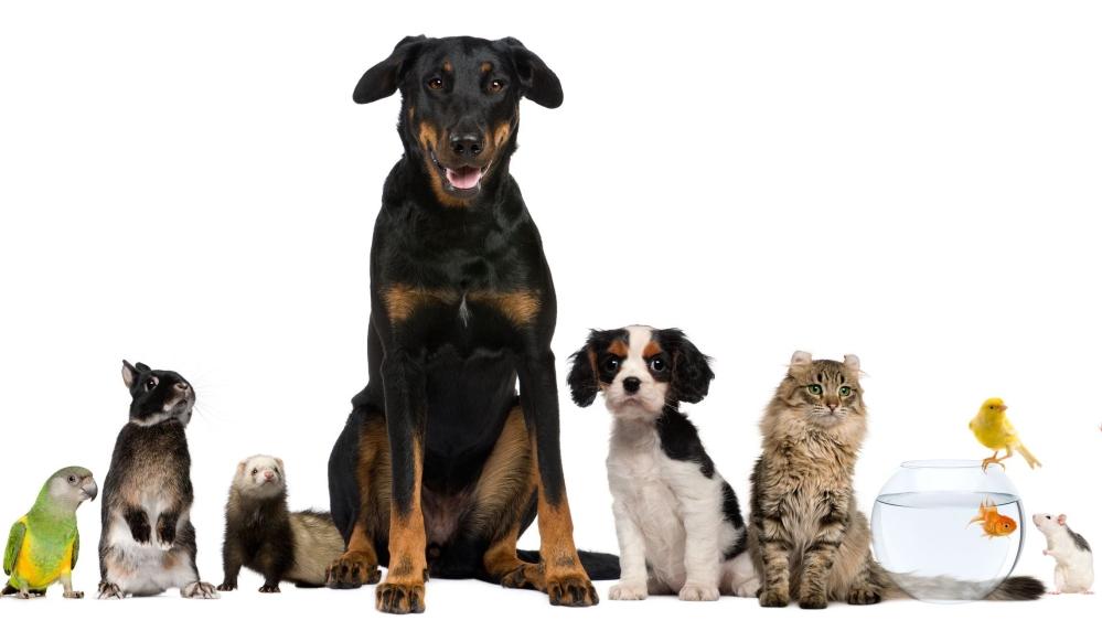 Товары для животных: описание пород и подбор рациона