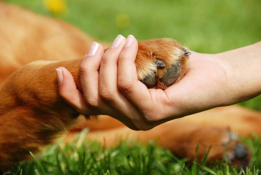 В Украине за жесткое обращение с животными теперь грозит тюремный срок