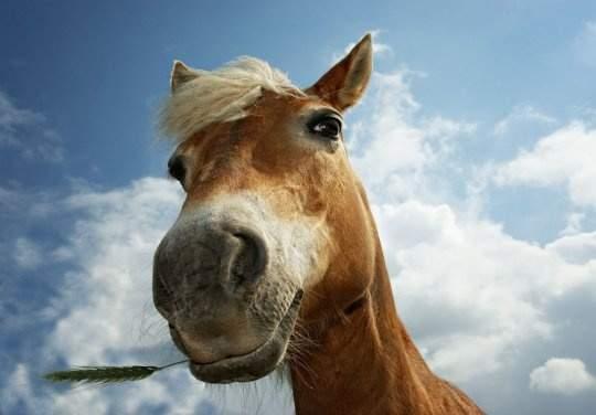 В Одессе прохожие реанимировали лошадь, которой стало плохо (Видео)