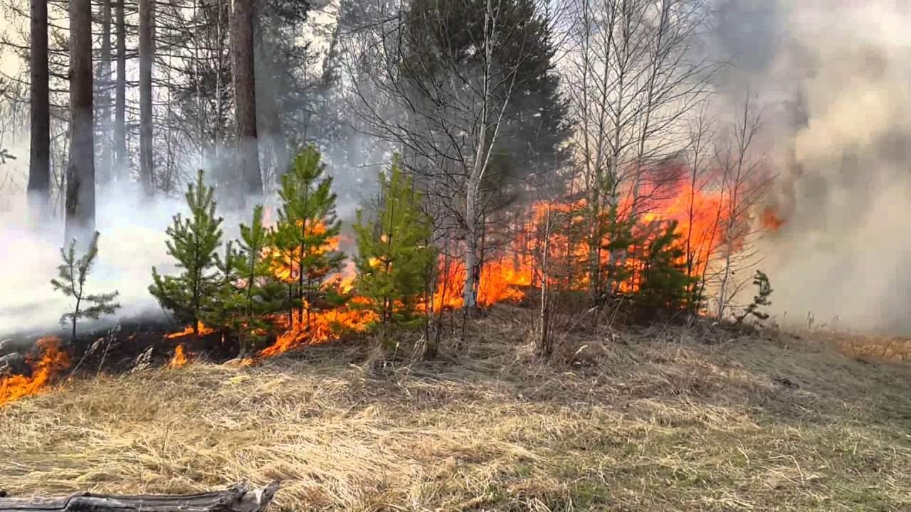 В Одесской области огнем был охвачен лес