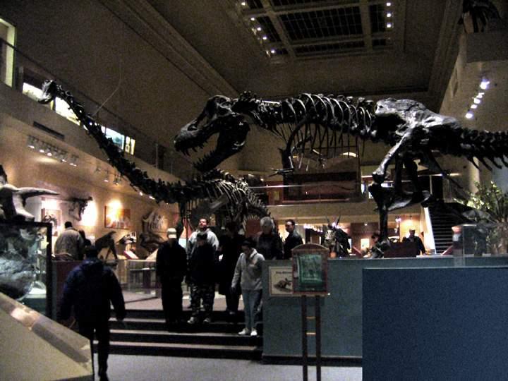 В австралийском музее вандалы отпилили головы динозаврам