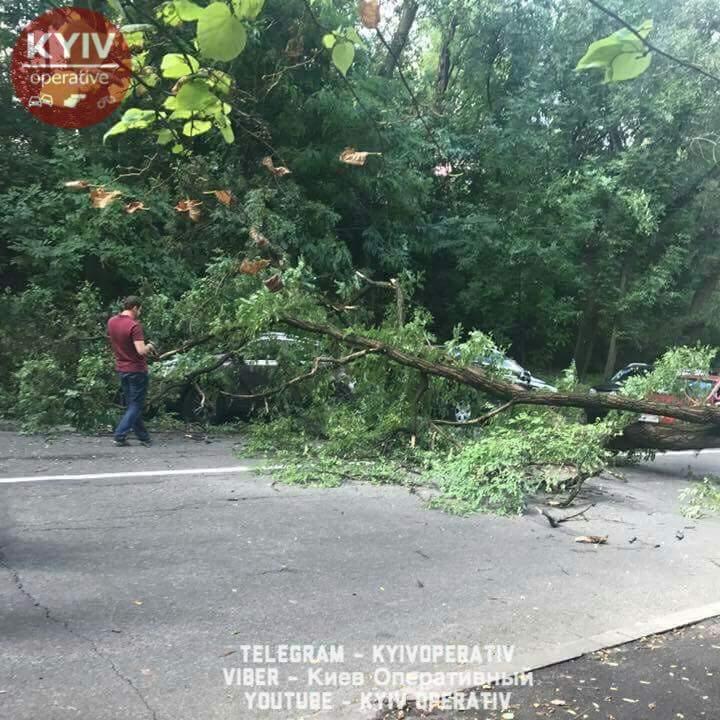 В Киеве на проезжую часть упало дерево (фото)