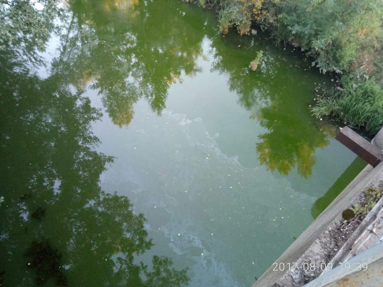 В Харькове возле танкового завода позеленела река (фото)