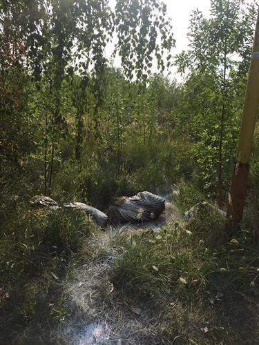 Зараженные мертвые свиньи раскиданы по всей трассе Киев-Чоп (Фото)