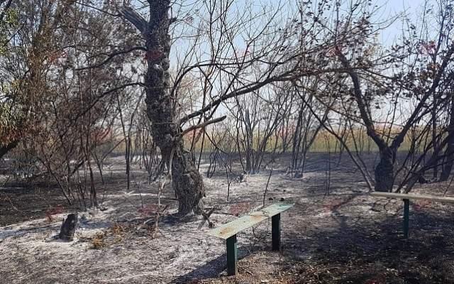 В Запорожской области крупный пожар уничтожил несколько десятков домов и автомобили (Фото)