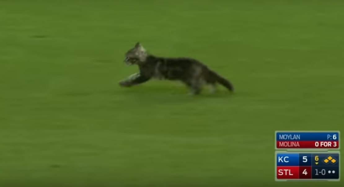 Во время бейсбольного матча на поле выбежал котенок (видео)