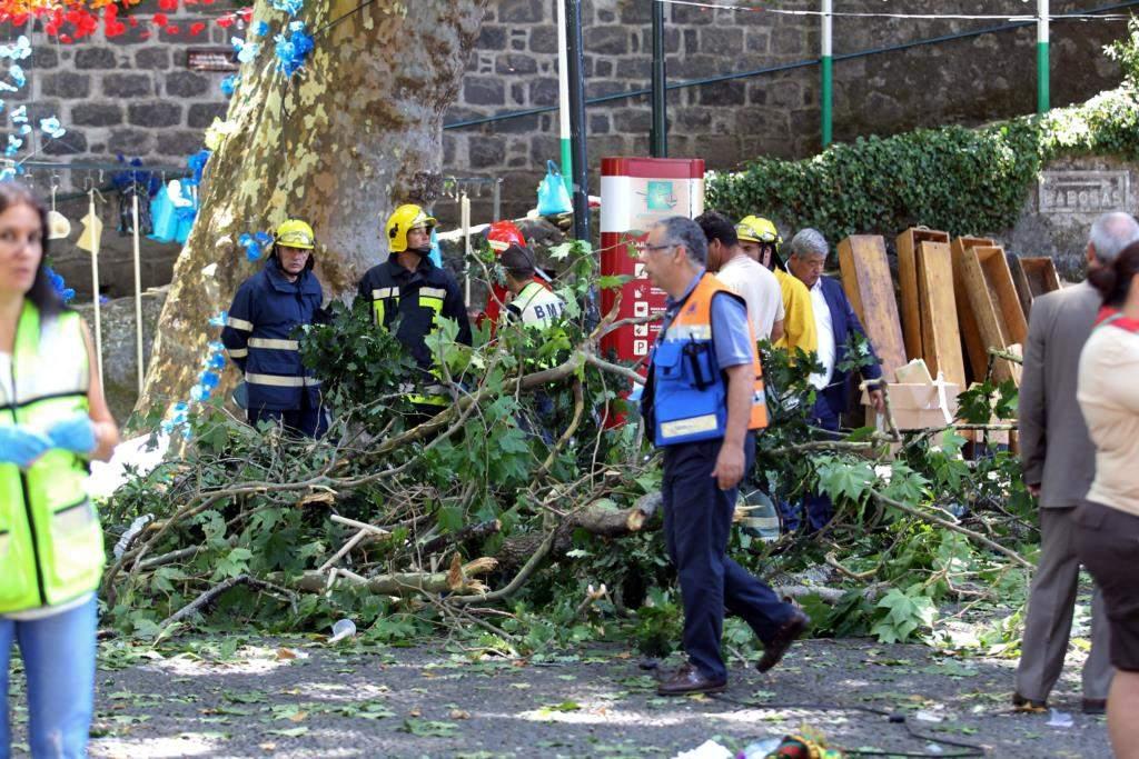 Недобрый знак для «Динамо»: накануне матча ЛЕ в Португалии дерево раздавило несколько человек
