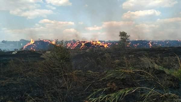 В Харьковской области загорелся лес, к тушению огня привлечена авиация (Видео)