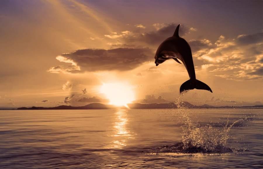 В Черном и Азовском морях повысилась смертность дельфинов
