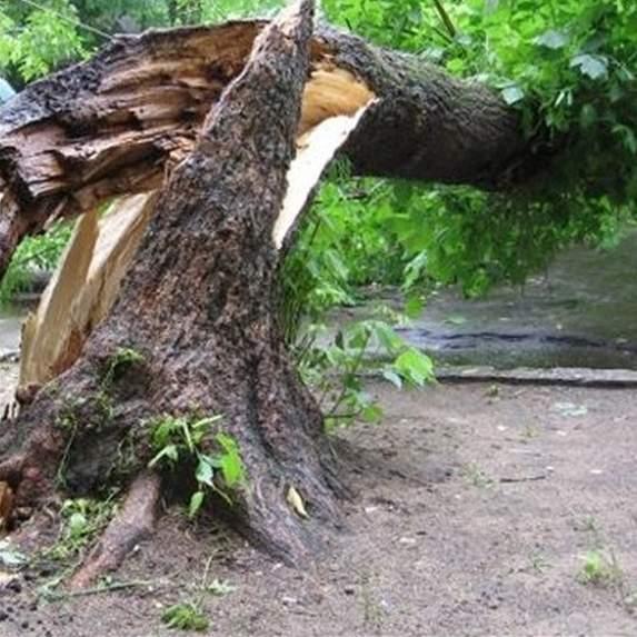В Одессе дерево рухнуло на проезжую часть и едва не раздавило автомобили