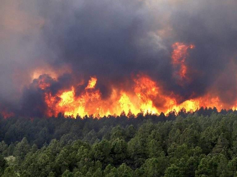 В Лос-Анджелесе продолжают бушевать лесные пожары: 200 семей вынуждены покинуть дома