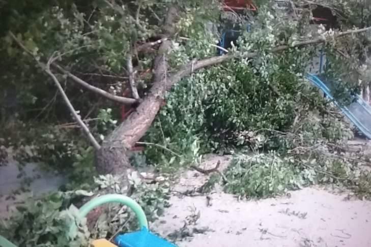 В столице на детскую площадку рухнуло дерево (Фото)