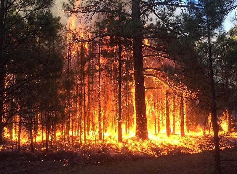 В Украине сохраняется высокий уровень пожарной опасности