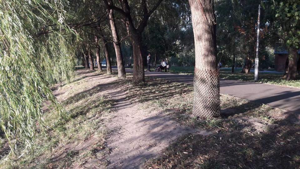 Отняли «добро» у бобра: в Киеве коммунальщики ловко отделались от бобра (фото)