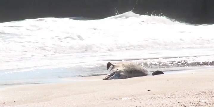 В Одессе на берег выбросило тушу мёртвого дельфина (видео)