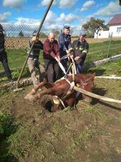 На Львовщине конь провалился в глубокую яму (Фото)