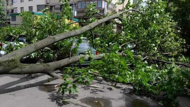 В Кривом Роге мужчину насмерть придавило деревом