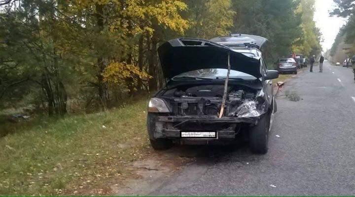 На Киевщине произошло ДТП, в результате которого погиб лось (фото)