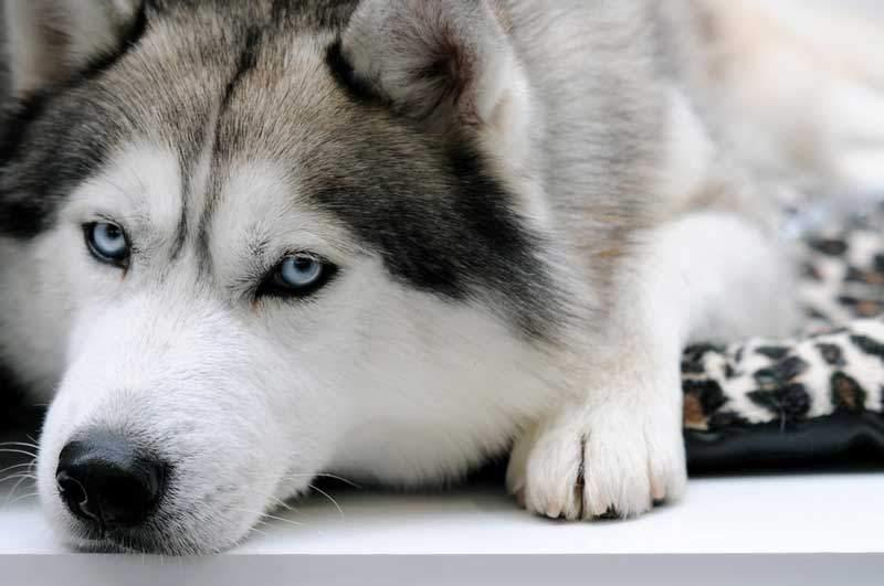 С места аварии на Львовщине пропал раненный пес