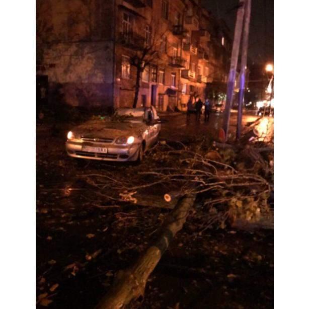 В Черновцах после урагана начался деревопад (фото)