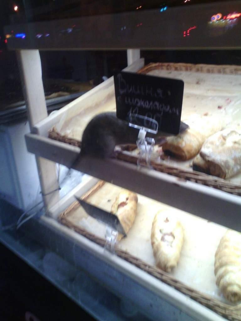 «Рататуй вместе с выпечкой»: В Запорожье заметили крысу на прилавке с хлебо-булочными изделиями (фото)